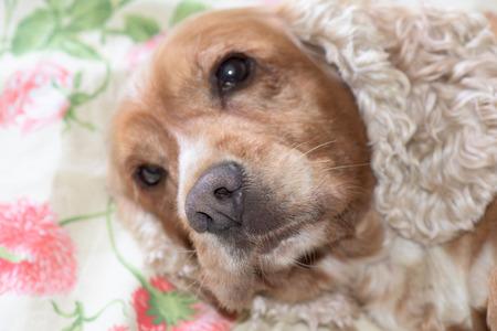 nose close up: dog nose macro close up detail