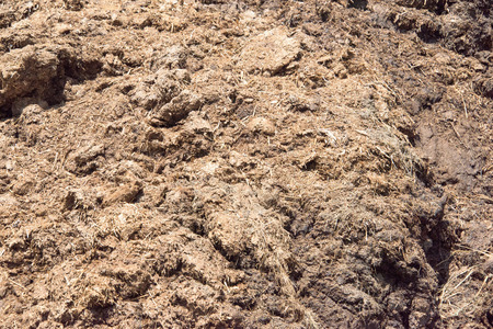 dung: cow dung covered by fly on the grass