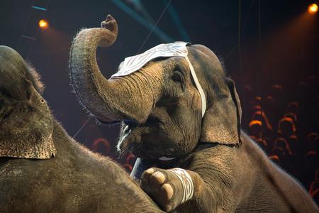 circus elephant on black background Archivio Fotografico