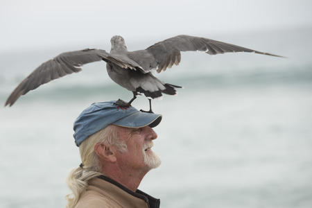 zuma: LOS ANGELES, USA - AUGUST 3, 2014 - seagull landing on a man head in Zuma sandy beach