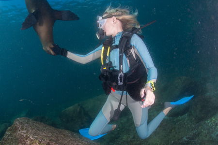 girl underwater: sea lion seal coming to blonde diver girl underwater Stockfoto