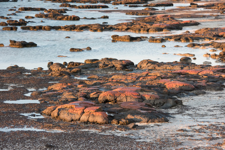 photosynthetic: Stromatolites black rocks beach in West Australia at sunset