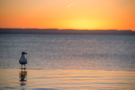 zuma: portrait of seagull on sandy beach on golden sunset background Stock Photo