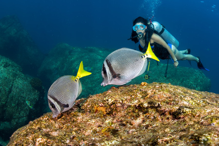 blue fish: scuba diver in fish and corals reef blue ocean background