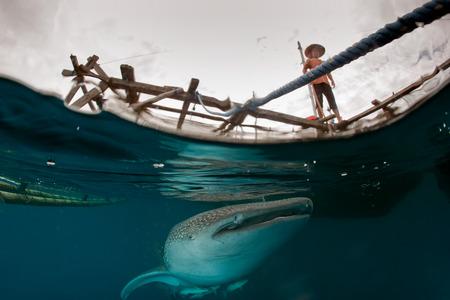 whale shark: Whale Shark under fishermen platform in Papua