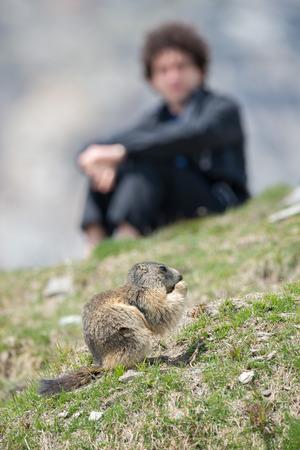 hog: ground hog marmot day close up portrait Stock Photo