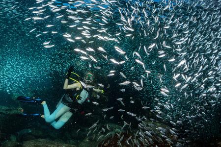 refrescar: hermosa rubia buceador de buceo en el mar azul profundo dentro de un banco de peces Foto de archivo