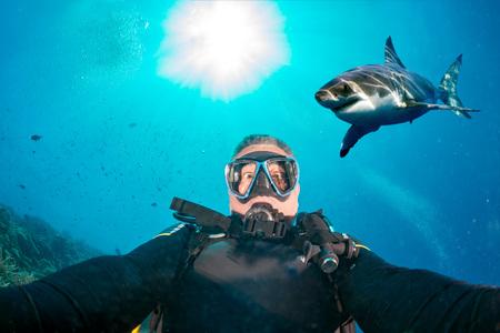 ホオジロザメがダイバーを攻撃する準備ができて