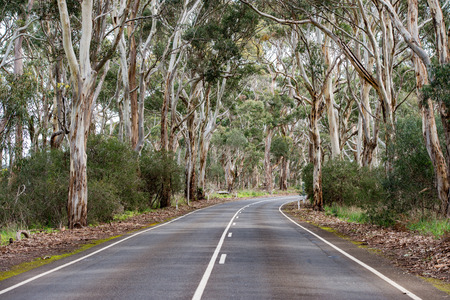 kangaroo island: australia road in green eucalyptus forest in kangaroo island