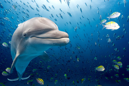 dolphin underwater on ocean background looking at you Imagens - 52252442