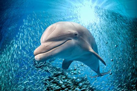 dauphin sous-marin sur l'océan fond vous regarde