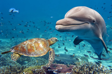 under the sea: dolphin and turtle underwater on reef background looking at you