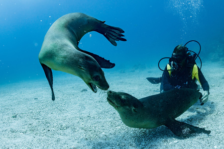 Puppy sea lions seal coming to you to have fun and play Imagens
