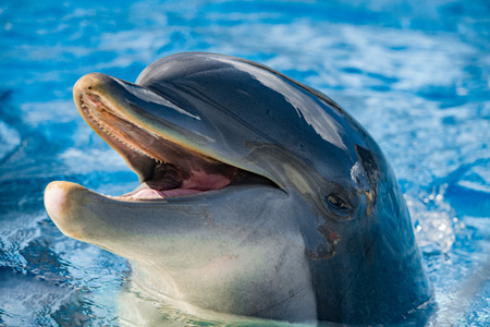 dauphin: Dolphin Close up portrait tout en vous regardant en souriant Banque d'images