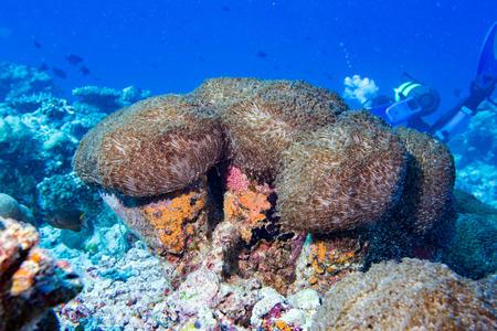 hard coral: colorful hard coral macro while diving