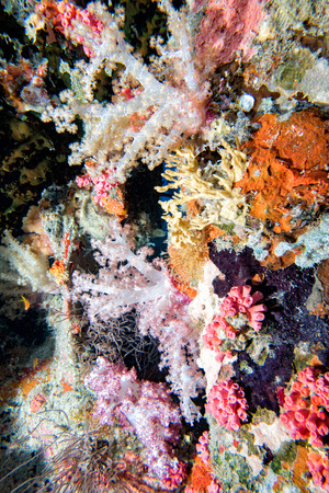 ship wreck: corals growing on Ship Wreck underwater while diving