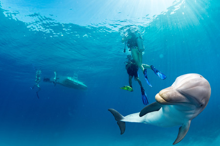 dolphins: dolphin underwater on ocean background looking at you with divers background Stock Photo