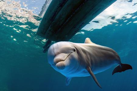 bajo el agua con delfines en el fondo del océano que le mira