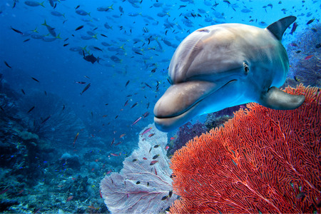 dolphin underwater on ocean background looking at you Imagens - 54481564