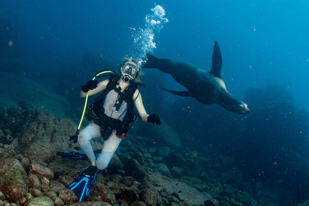 girl underwater: sea lion seal coming to blonde diver girl underwater Stock Photo