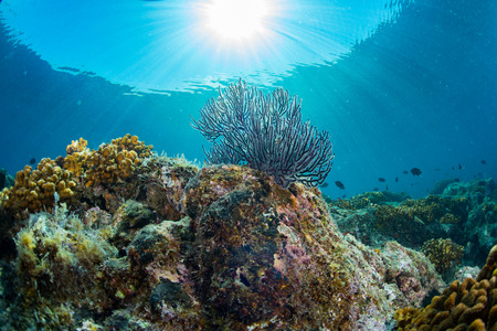 great bay: colorful reef underwater landscape with fishes and corals Stock Photo