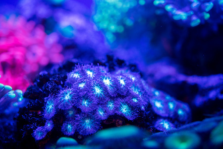 hard coral: A colorful hard coral macro while diving