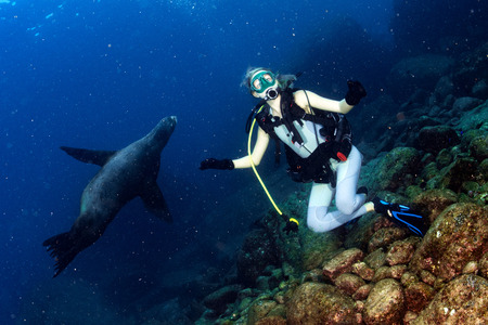 girl underwater: sea lion seal coming to beautiful blonde diver girl underwater