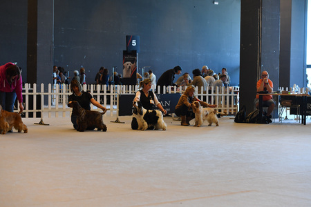 obediencia: GENOA, ITALY - MAY 21 2016 - Annual public international dog show with more than thousand different dogs from all over the world, best in show, agility, obedience, defence, control, command.