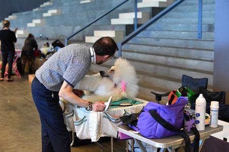 obediencia: Génova, Italia - 21 MAY 2016 - Exposición Internacional Anual pública con más de mil perros diferentes de todo el mundo, el mejor del mundo del espectáculo, agilidad, obediencia, defensa, control, mando.