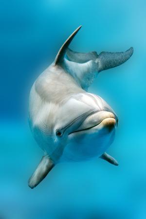 눈의 tursiop 돌고래 초상화 세부 바다에서 당신을 찾고있는 동안 스톡 콘텐츠