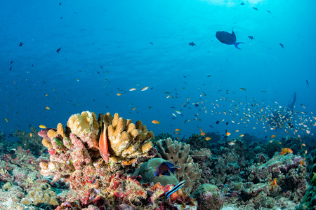 Maldives corals house for Fishes underwater landscape 写真素材