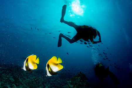 butterfly fish: two butterfly fish in maldives with scuba diver silhouette