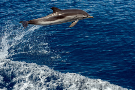 energy channels: striped dolphin jumping outside the sea