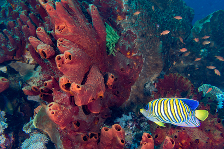 realms: The colorful underwater realms of Raja Ampat, Papua Indonesia Stock Photo