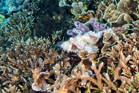 stonefish: Juvenile Dangerous Stone Fish close up underwater portrait