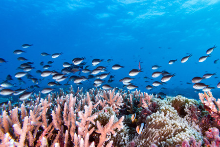 realms: The colorful underwater realms of Raja Ampat, Papua Indonesia. Corals and fishes Stock Photo