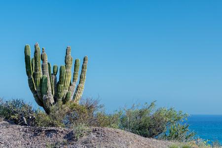 cactus in Cabo Pulmo Baja California national park panorama landscape