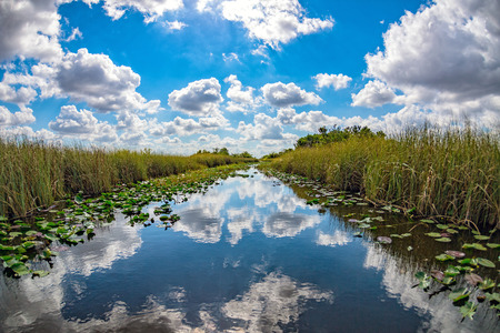 florida everglades view panorama landscape on sunny day