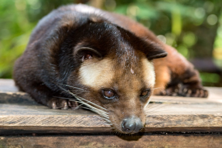 Kopi luwak is coffee that includes part-digested coffee cherries eaten and defecated by the Asian palm civet moongoose