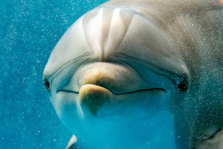 tursiop dolphin portrait detail of eye while looking at you from ocean Reklamní fotografie - 82877728
