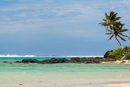 coconut palm tree on polynesia crystal waters sandy beach