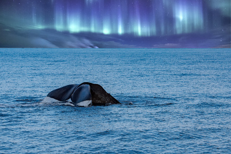 Sperm whale tail on northern lights sky background