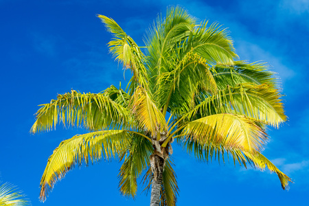 coconut palm tree detail close up in polynesia Stock Photo