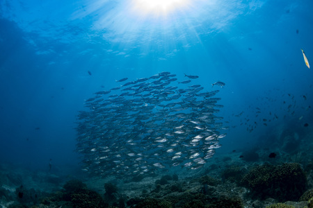 inside a giant sardines school of fish bait ball Stok Fotoğraf - 89454808