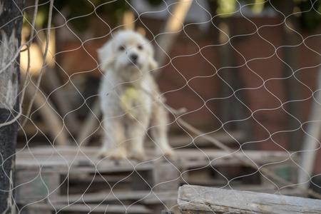 sad caged dog looking at you