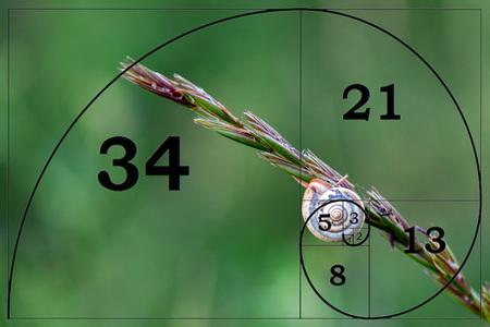fibonacci sequence Mathematical curves on snail golden rule