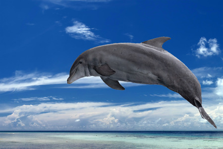 common dolphin jumping in the tropical paradise crystal waters background