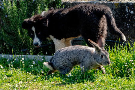 rabbit bunny and dog playing together Stock Photo