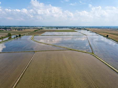 rice cultivation of farmed flood fields in northern italy aerial view