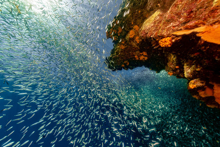 inside a giant sardines school of fish bait ball